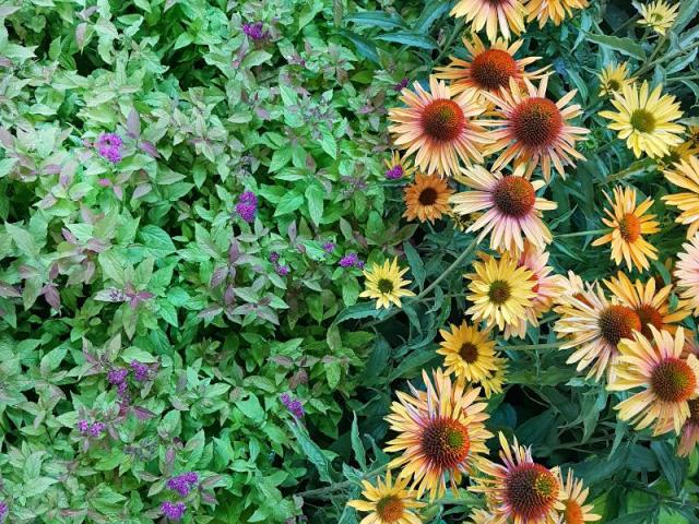 Targi ogrodnicze