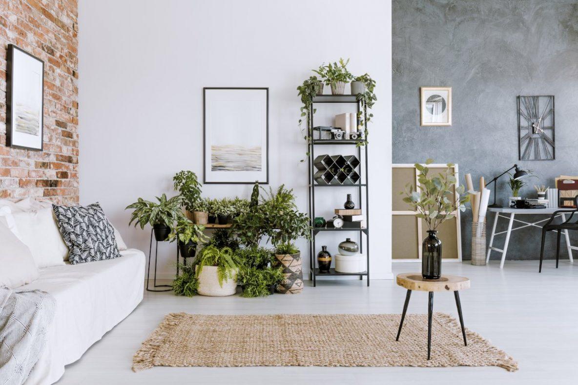 Rośliny pokojowe